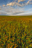 Nature Conservancy,Oklahoma,Osage County,Tall Grass Prairie Preserve,prairie