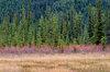 Alberta,Banff NP,Canadian Rockies,Ice Fields Parkway