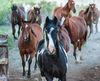 Colorado,Medano Ranch,Summer, horses