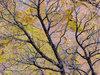 Burned Tree & Lichen Covered Tuff