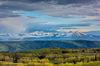 Colorado,Deep Creek plateau,Spring,White River Plateau, aspen