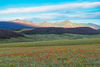Sub-Alpine Meadow And La Garita Peaks