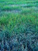 Frosty Mountain Meadow