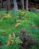 Scotland,heather,ferns