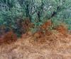 Tumble weed Tangle
