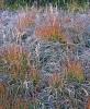 Frosty Autumn Grass