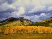 Gothic Valley Autumn