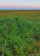 Tall Grass Prairie,grass,prairie,Oklahoma, dawn