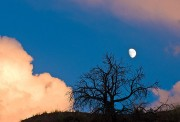 Moon, Tree and Clouds