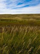 Douglas County Prairie #2