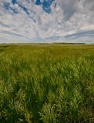 Sandhills,prairie,grass,grasslands,Valentine National Wildlife refuge
