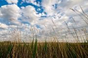 Nebraska,grass,prairie