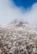 Colorado Springs,High Chaparral Open Space,frost,oak tree