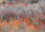 Winter Willow Tapestry #2