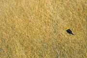 birds,Kansas