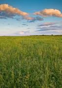 Nature Conservancy, Oklahoma, Spring, Tall Grass Prairie Preserve,grass,prairie