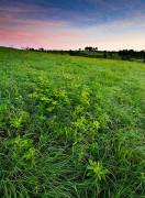 Nature Conservancy, Oklahoma, Spring, Tall Grass Prairie Preserve