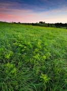 Nature Conservancy, Oklahoma, Spring, Tall Grass Prairie Preserve