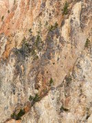 Canyon Wall Abstract