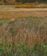 grass,autumn,fall color