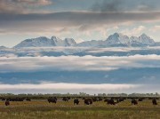 bison,clouds