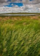 Nebraska, Sandhills,National Wildlife Refuge,Crescent Lake,grass,prairie