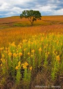 Tall Grass Prairie,Kansas,grass,Fall color,wildflowers