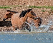Cooling Splash