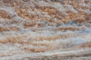 Frosty Grass and Tumbleweeds