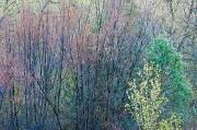 Colorado Monet