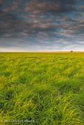Kansas Summer Prairie