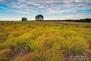 Cedar Bluff Prairie