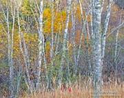 Tettegouche State Park,Minnesota,trees,Autumn
