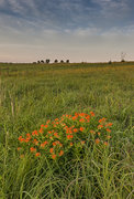Nature Conservancy,Oklahoma,Osage County,Tall Grass Prairie Preserve,prairie