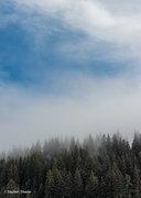 Alaska,Glacier Bay NP, fog, trees, Glacier Bay National Park