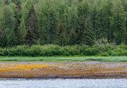 trees, Alaska, shoreline, Glacier Bay National Park