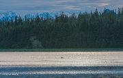 Alaska, Glacier Bay National Park, Glacier Bay, humpback whale