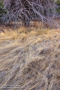 Chiricahua Meadow