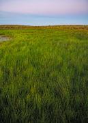 Sedge Meadow Dawn
