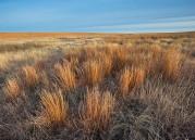 grass,big bluestem,Kansas,prairie,Winter