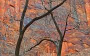 sandstone, Zion National Park, trees,Navajo Sandstone