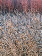 Winter Marsh Tapestry