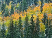 Colorado Rockies, Fall colors, aspens