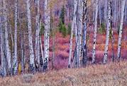 Rocky Mountain Autumn Tapestry #2