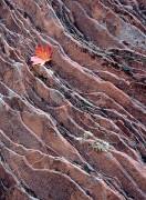 Sandstone and Leaf