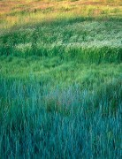 Tapestries of Grass