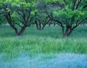 Grass in the Orchard