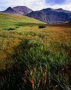 Alpine Meadow Splendor