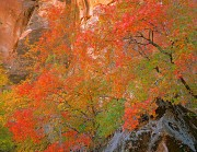 Zion Autumn Splendor #1