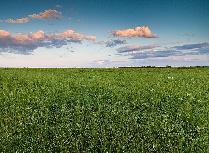 Prairie Preserve Grass Prairie Preserve